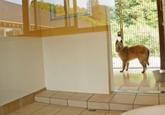 Dogs are housed in spacious enclosures