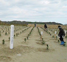A project to restore a seaside forest washed away by the tsunami
