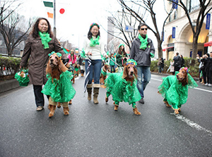 Irish red setters joined the parade.