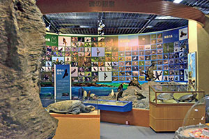 The Oki Islands Geopark visitor centre includes exhibits on local wildlife.